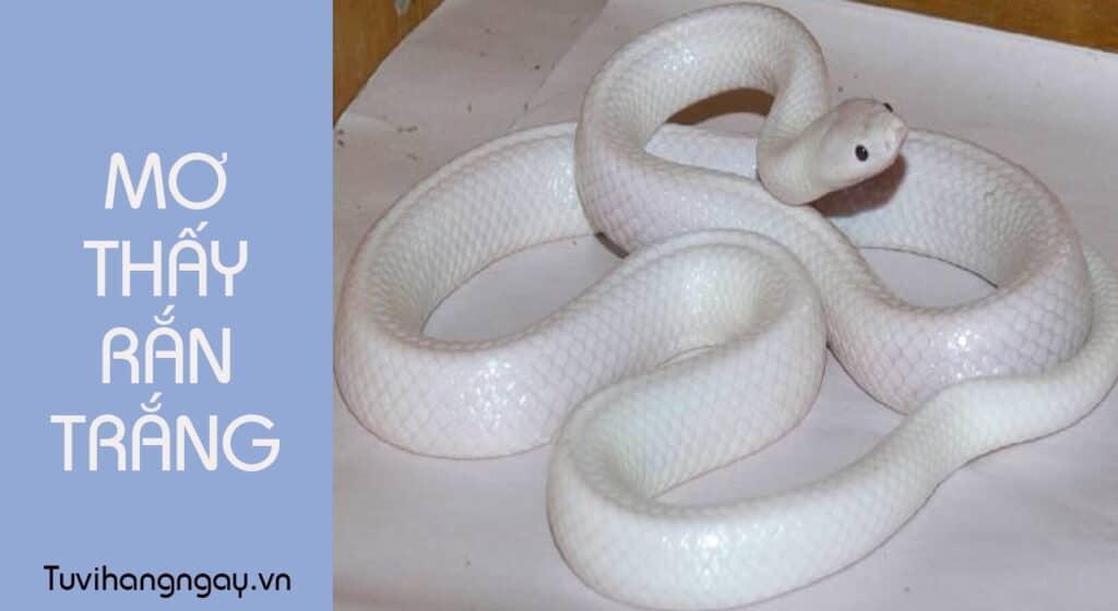 Mơ thấy rắn trắng